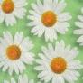 08 - Corino floral margarida verde -Cadeiras cromadas para cozinhas Sidamo